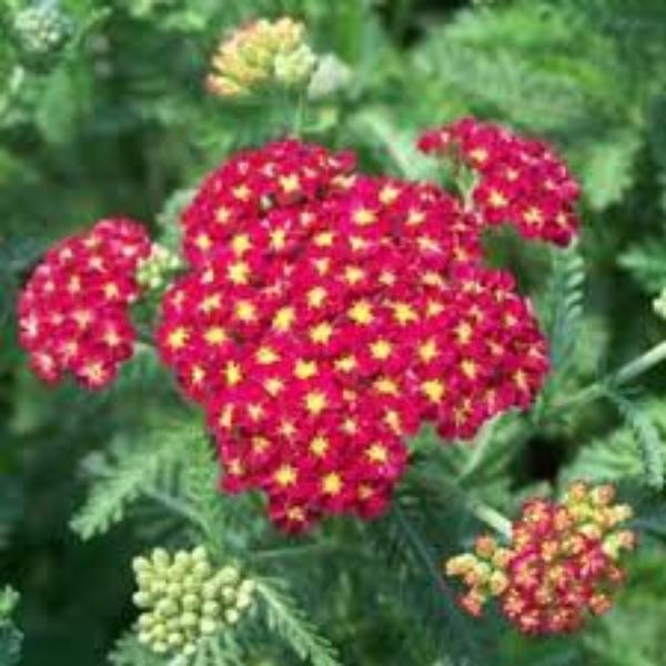 Des Fleurs  (9630)