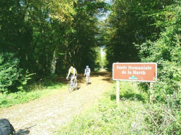 Des Forêts  (9567)