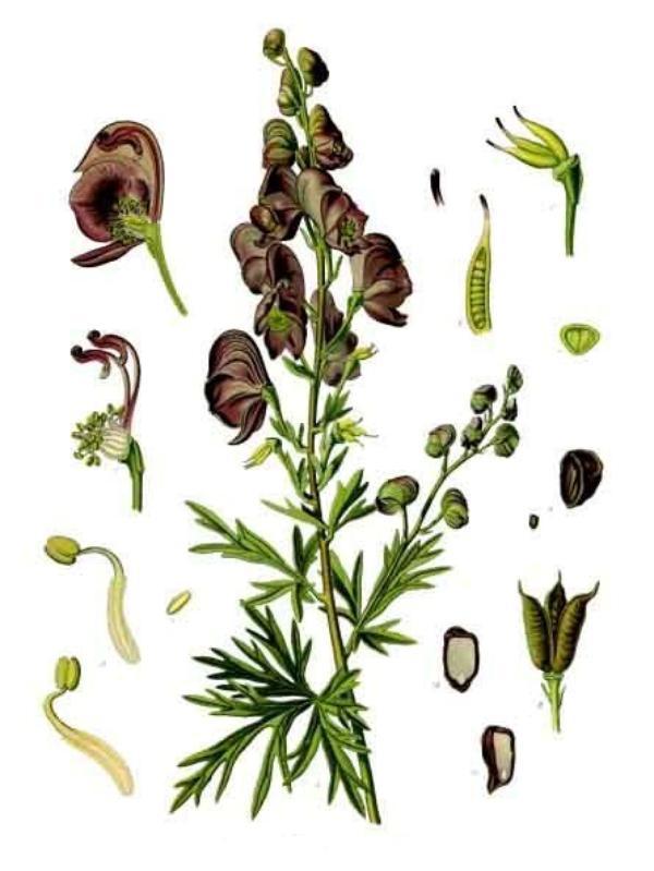 Des Fleurs (8569)