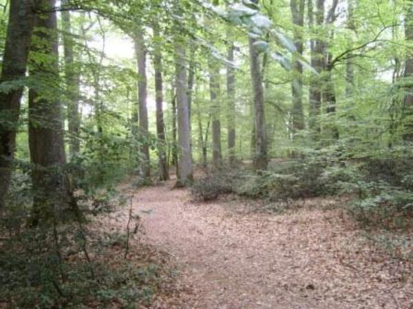 Des Forêts (8872)