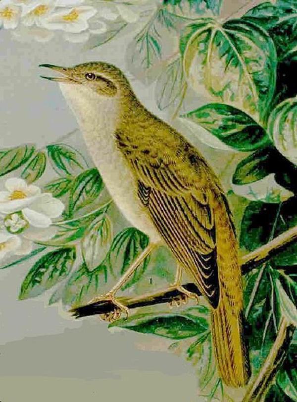 Des Oiseaux  (8881)