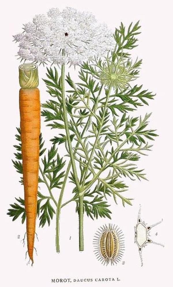 Des Légumes  (8166)