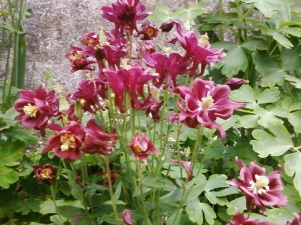 Le Langage des Fleurs (10837)