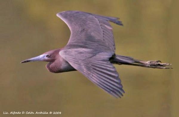 Des Oiseaux  (11406)
