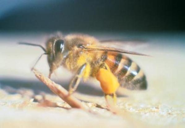 Des Insectes   (11440)