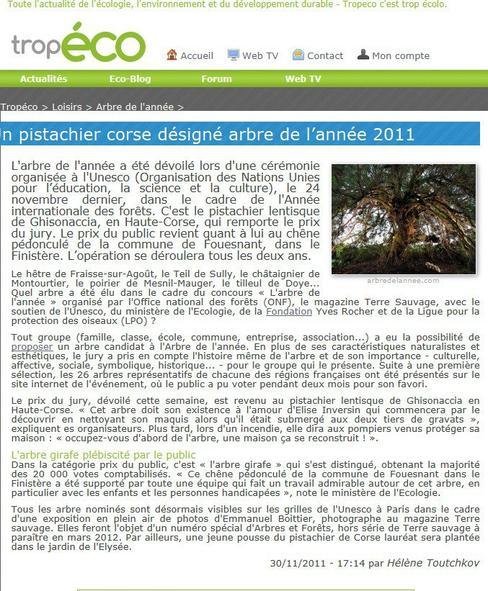 """l'arbre de l'année est Corse il """"habite"""" à Ghisonaccia"""