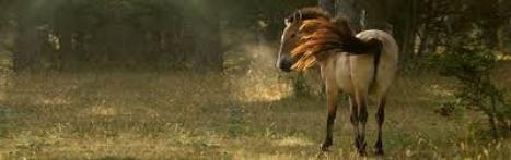 Le cheval de Przewalski !