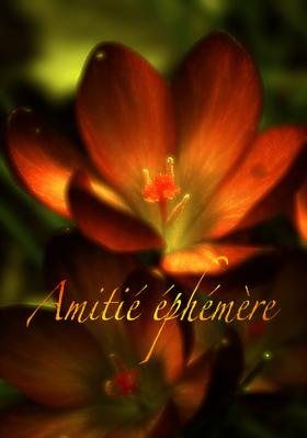 X - Amitié éphémère