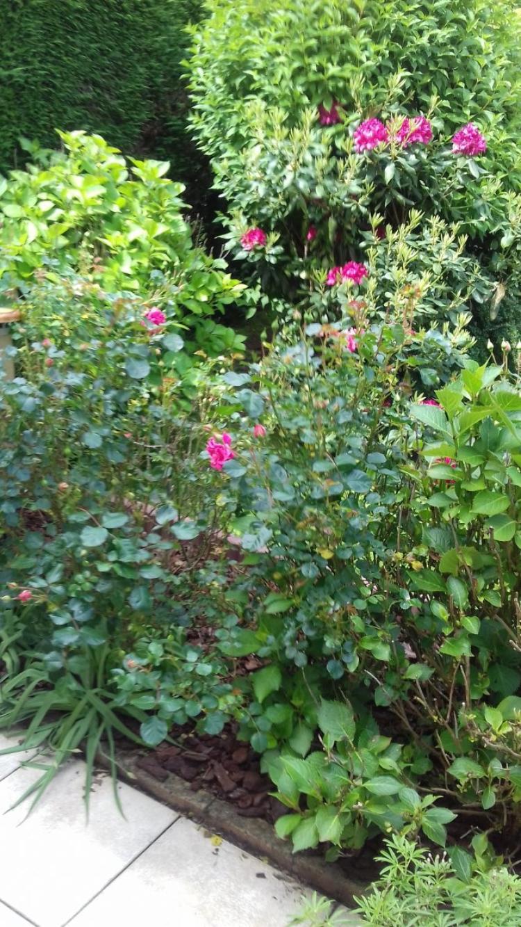 voila mon petit jardin derriere la maison