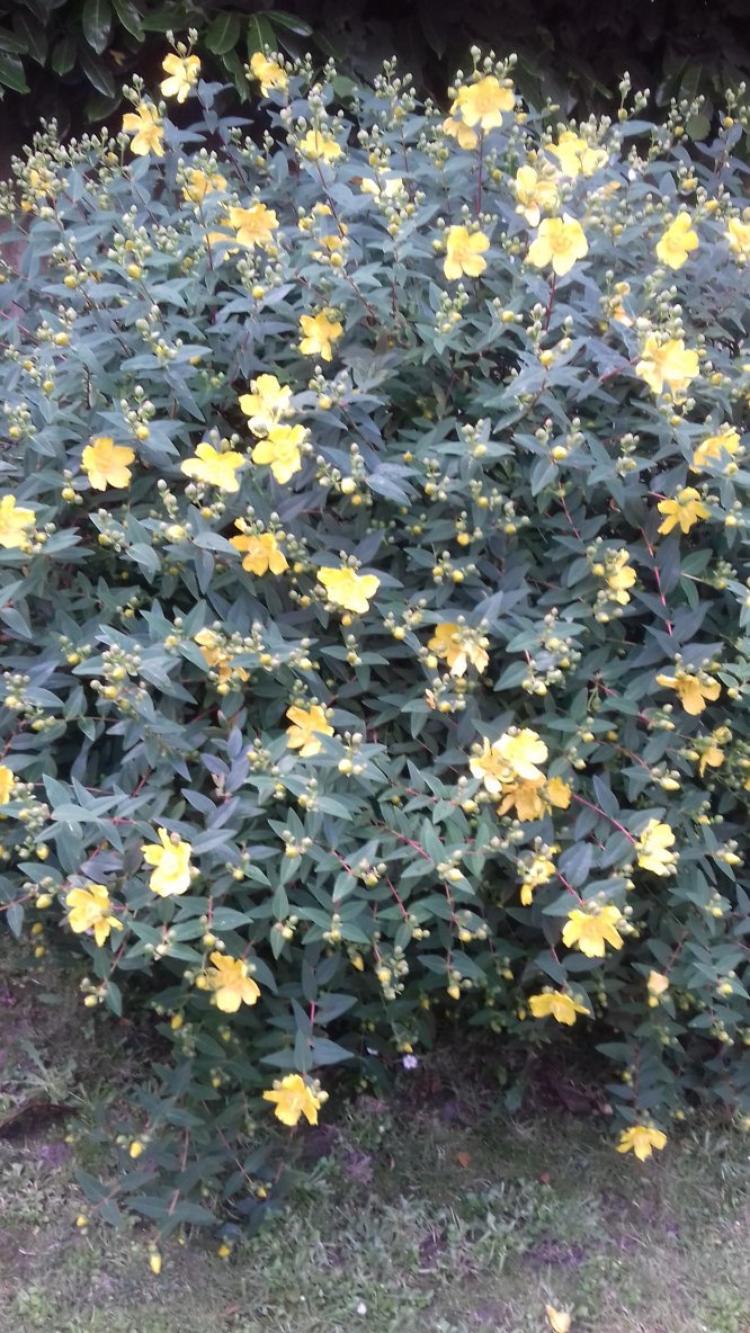petit coin fleuri de mon jardin