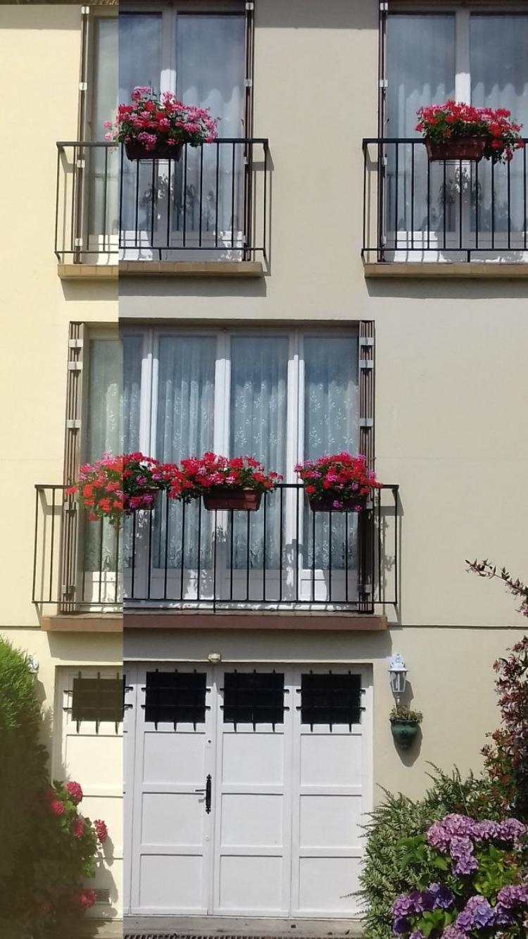 voila mes geraniums , ils ont resiste au vent et a la pluie
