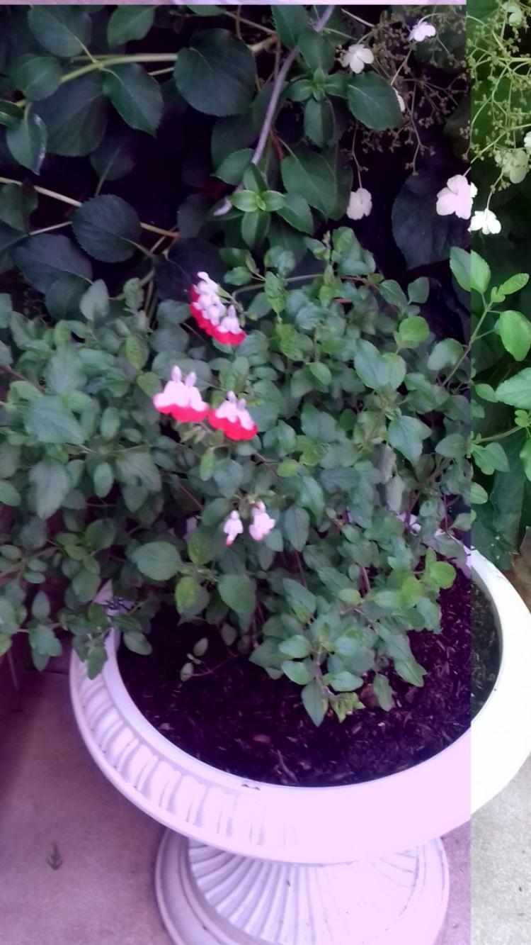 voila mon petit coin fleuri