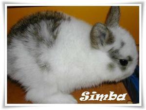 Présentation de Simba