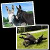 Maria & Tabea, les ânes communautaires.