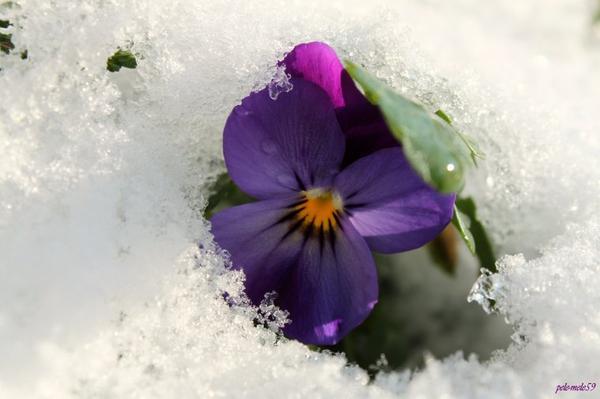 Petite pensée sous la neige !