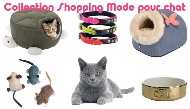 Shopping mode pour chat élégant chez Jaiduchien.com !