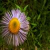 « Fleur . #o3