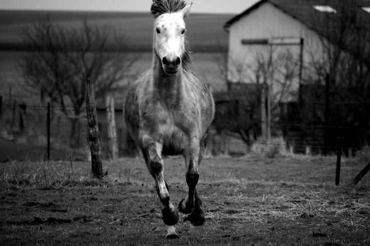 Si quelqu'un te dit c'est juste un cheval, contente toi de lui sourire, il ne peux pas comprendre.