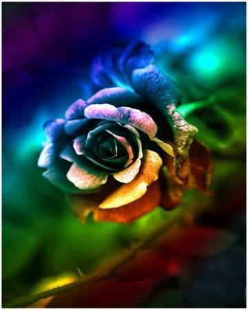 acceptez la fleur de l amitie sur notre terre a tous tagui artpassion. Black Bedroom Furniture Sets. Home Design Ideas