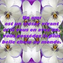 <3 Les AMIS <3
