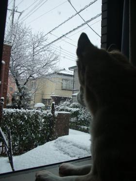 Snowing in Tokio