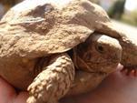 Bienvenue sur le blog consacré entièrement aux tortues !!!