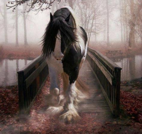 Un beau cheval de trait.