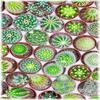 Cactus-mania.skyblog.com