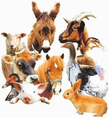 _Parce qu'un animal ne ment jamais, protégez les_
