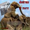 Le commerce des éléphants !