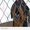 Une femme se fait arracher le bras par son chien  Par TF1 News (Avec agence), le 28 novembre 2009 à 15h03, mis à jour le le 28 novembre 2009 à 15:12  Habitant la Baume d'Hostun (Drôme), la victime âgée de 54 ans a été hospitalisée dans un état critique vendredi soir. Le membre arraché n'a pu être retrouvé