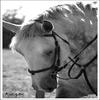 « L'homme n'aura jamais la perfection du cheval. » __________________________________________________________SPINOZA.