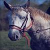 « Le cheval porte son cavalier avec vigueur et rapidité. Mais c'est le cavalier qui conduit le cheval. Le talent conduit l'artiste à de hauts sommets avec vigueur et rapidité. Mais c'est l'artiste qui maîtrise son talent. »  VASSILI KANDINSKY.