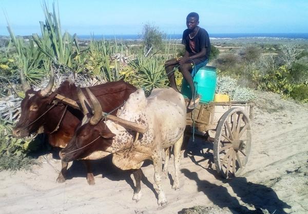 Fort Dauphin - Tuléar par l'extrême Sud  de Madagascar - Tour pendant 9 jours