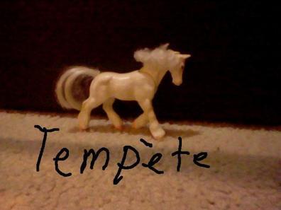 Les chevaux (suite)