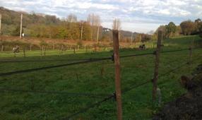 23/11/11 les nouvelles clôtures sont faites !