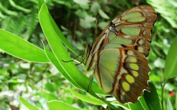 Photos nature...