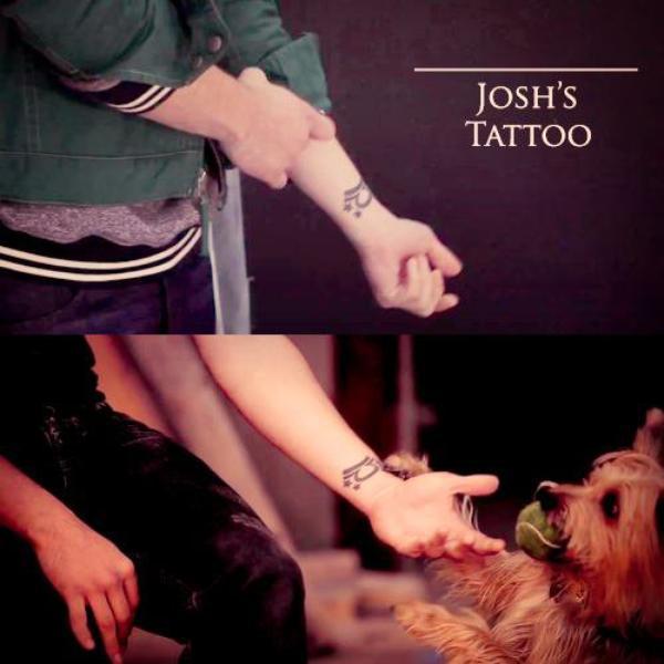 josh et les animaux