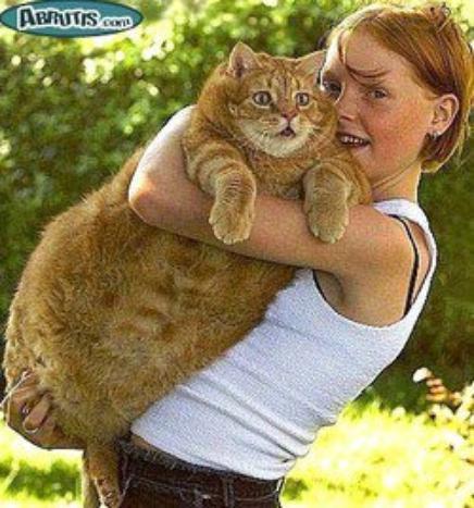chat  alors ze crois bien avoir vu des ros minets