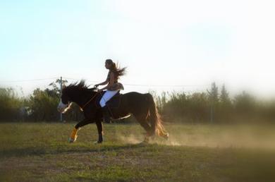Octobre & Novembre 2012 : Only the horses ♪