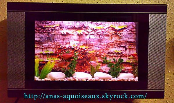 Aquarium plasma r alisation maison blog de anas aquoiseaux for Aquarium decoratif mural