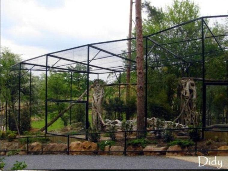 chat pecheur entrer dans l 39 univers du parc zoologique de. Black Bedroom Furniture Sets. Home Design Ideas