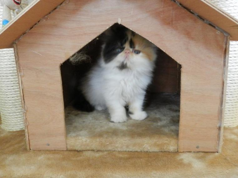 Helina  a trouvée une nouvelle maison, elle partira chez nadège
