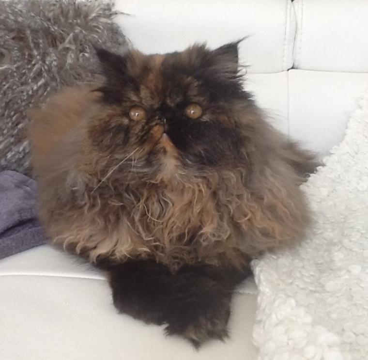 Quelques nouvelles des chatons 2012