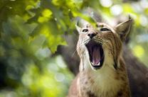 ℒa Déclaration Universelle des Droits de l'Animal