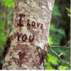 ...Je t'Aime...