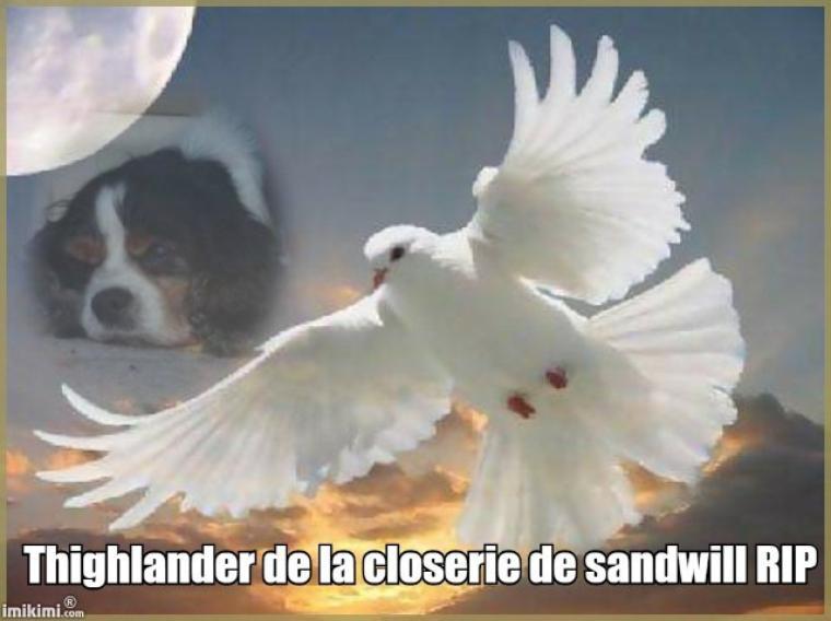 repose en paix Thighlander de la closerie de Sandwill