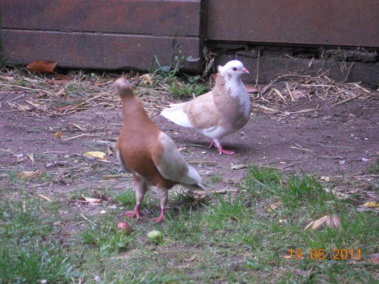 les femmelle kii fon la récolten de brindille pour le nid les male étai trop faignant xp