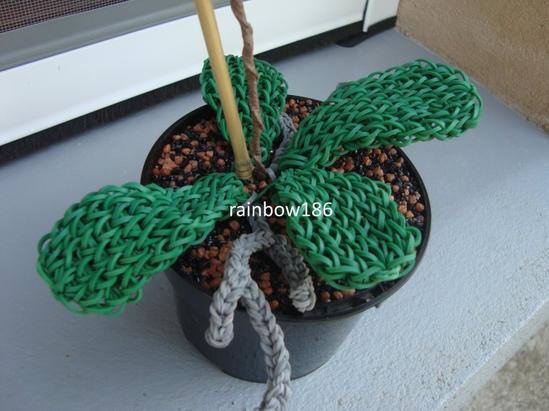 Phalaenopsis : orchidée loom