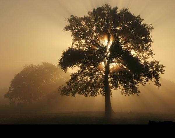 L'arbre qui se comportait comme un chasseur